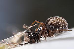 La faune minuscule - Macro et Proxi Photo