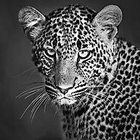 La nature en noir et blanc